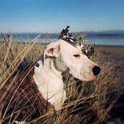 Ebek szépe szépségverseny