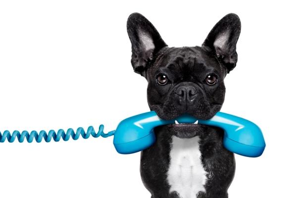 Acanashop új telefonszáma +36204346922